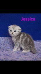 Shot Lari Jessica